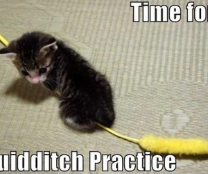 cat, quidditch, and harry potter image