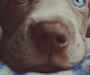 animals, dogs, and eyes image