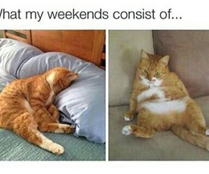 cat, funny, and weekend image