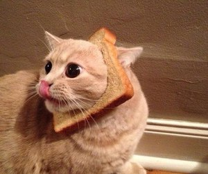 cat and bread image