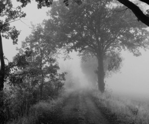 tree, fog, and mist image