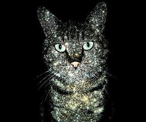 cat, glitter, and black image