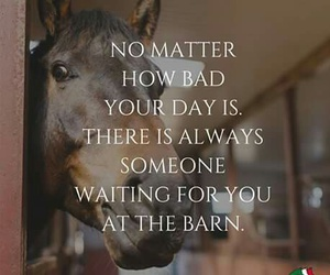 barn, badday, and horses image