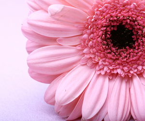 flor, pink, and love image