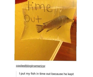 funny, fish, and tumblr image