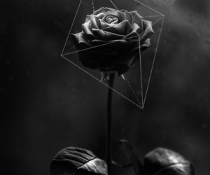 bianco e nero, geometric, and rosa image