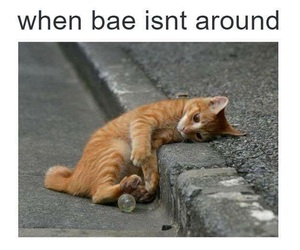cat and bae image