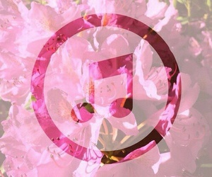 music, flowers, and pink image