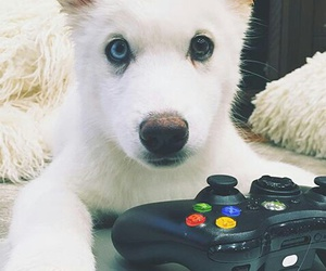 dog, games, and storm image