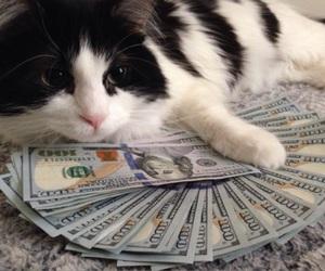 cat, money, and animal image