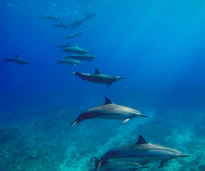 dolphin, ocean, and nature image