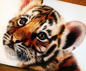 tiger, cute, and drawing image