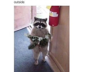 funny, animal, and cat image