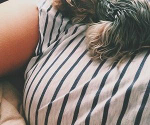 baby, baby bump, and dog image