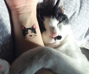 cat, tattoo, and animal image
