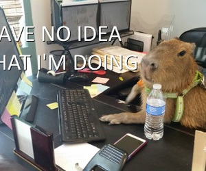business, capybara, and funny image