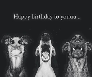 dogs, happy birthday, and wishes image