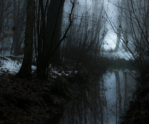 forest, dark, and fog image