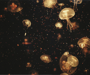 jellyfish, photography, and light image