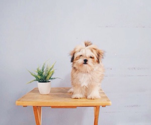 dog, animal, and plant image