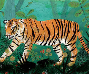 tiger and illustration image