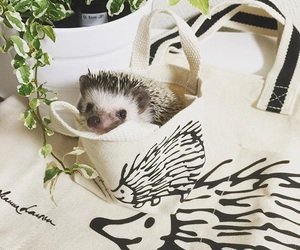 aesthetic and hedgehog image