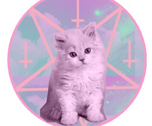 cat, pastel, and kitty image