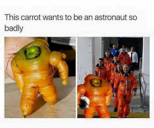 funny, carrot, and lol image