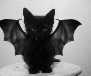 cat, black, and bat image