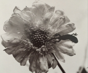 flower, gray, and sick image
