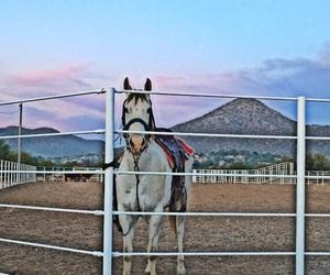caballos and yeguamora image