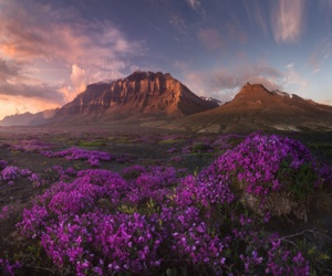 mountains, greenland, and lavender image