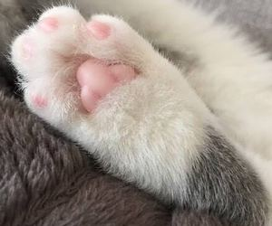 paw, adorable cat, and wholesale7 image