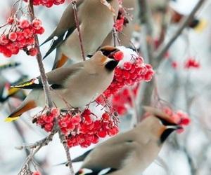 beautiful, berries, and nature image