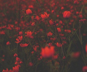 background, flowers, and red image