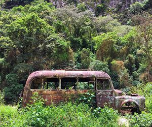 bus, cars, and green image