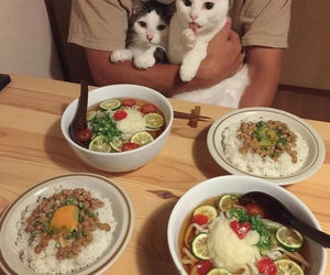 cat and food image