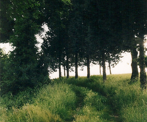 nature, forest, and grass image