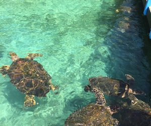 turtle and water image