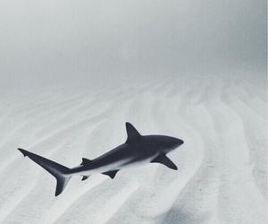 shark, ocean, and sea image