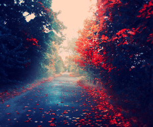 autumn, red, and tree image
