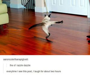 cat, cats, and haha image