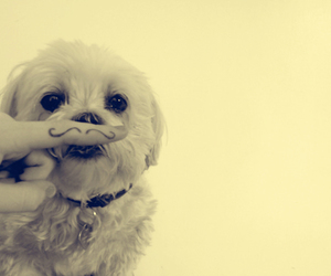 dog, mustache, and cute image