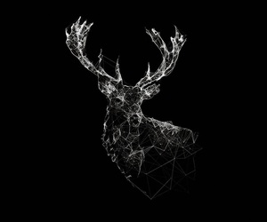 wallpaper, black, and animal image