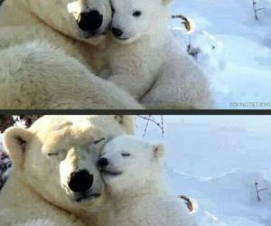 love, Polar Bear, and bear image