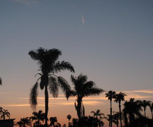 palm trees, San Diego, and sunset image