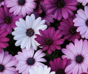 380 Images About Wallpapersflowers On We Heart It See More About