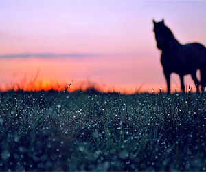 dew, horse, and nature image