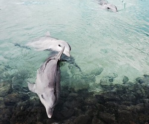 dolphin, sea, and animal image