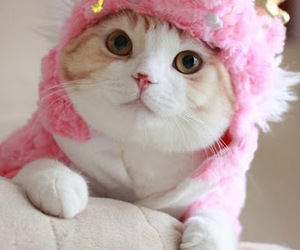 costume, pink, and cute image
